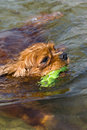 Free A Dog Swimming With A Rubber Ring Royalty Free Stock Photography - 9672907