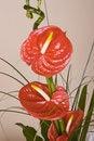 Free Beautiful Flower Gerbera Royalty Free Stock Images - 9679409