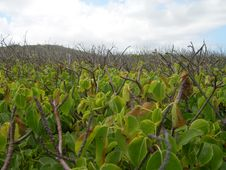 Free Tropical Shrubs Stock Image - 9670021