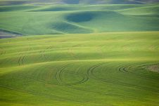 Free Palouse Patterns Royalty Free Stock Photo - 9670615