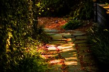 Free Mossy Trail Royalty Free Stock Image - 9672076