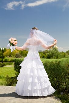 Free Back Of The Bride Royalty Free Stock Photo - 9675225
