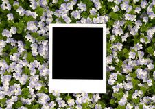 Photo On Floral Background Stock Images