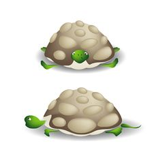 Turtle Front Stock Photo