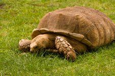 Free Turtle Eating Royalty Free Stock Image - 9679306