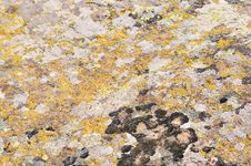 Free Moss And Lichen On Granite Stone Stock Images - 9679504