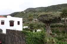 Free Icod De Los Vinos On Tenerife Stock Photos - 9679763