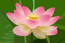 Free Flower, Lotus, Sacred Lotus, Aquatic Plant Stock Image - 96731721