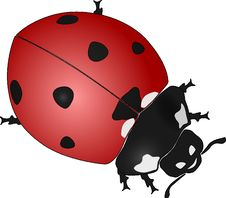Free Red, Ladybird, Insect, Invertebrate Royalty Free Stock Images - 96731839