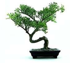 Free Plant, Bonsai, Tree, Sageretia Theezans Stock Photo - 96732250