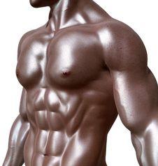 Free Bodybuilder, Body Man, Man, Bodybuilding Royalty Free Stock Photos - 96740298