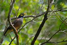 Free Bird On The Branch Stock Image - 96793551