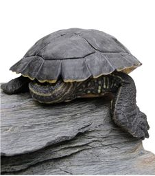 Free Turtle-shell Stock Photos - 9680283
