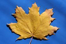 Free Dry Leaf Royalty Free Stock Image - 9683146