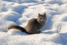 Free Cat Sitting On A Snow Stock Photography - 9683422