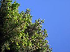 Free Tree Stock Image - 9684891