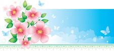 Free Flowers Over Blue Sky Stock Images - 9689534