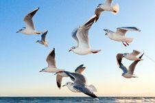 Free Sky, Bird, Seabird, Gull Stock Photos - 96802783