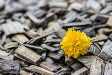 Free Flower, Yellow, Flora, Spring Royalty Free Stock Photos - 96803058