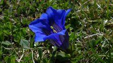 Free Plant, Flower, Flora, Bellflower Family Stock Image - 96816811