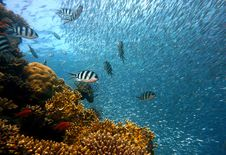 Free Coral Reef, Water, Reef, Marine Biology Stock Photography - 96821832