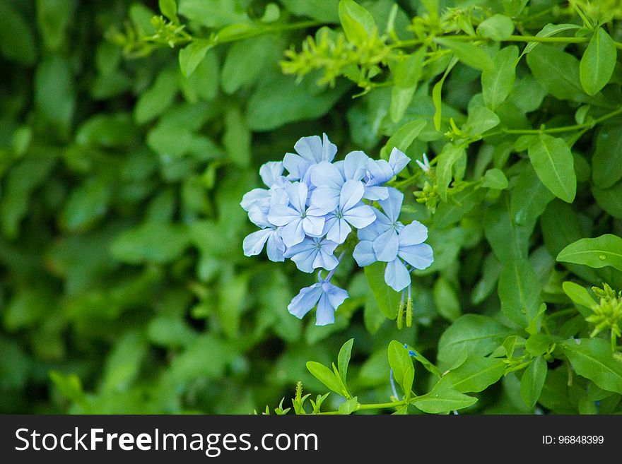 Beautiful Spring Flowers Blooming under the Sun, Different Types of Flowers