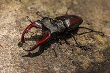 Free Insect, Invertebrate, Beetle, Arthropod Stock Images - 96857874
