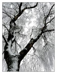 Free Tree, Branch, Black And White, Woody Plant Stock Photos - 96858613