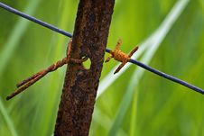 Free Insect, Ecosystem, Dragonfly, Fauna Royalty Free Stock Images - 96861899