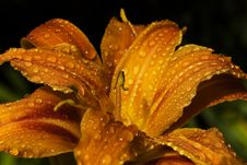 Free Flora, Close Up, Moisture, Macro Photography Royalty Free Stock Photo - 96870195