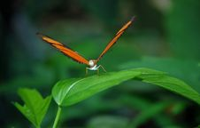 Free Insect, Butterfly, Moths And Butterflies, Dragonfly Stock Image - 96870211