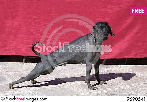 Free Dog In Cuzco Stock Image - 9690541