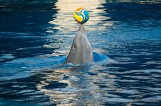 Dolphin Playing With A Ball Stock Images