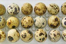 Free Quail Eggs Royalty Free Stock Photos - 9690698