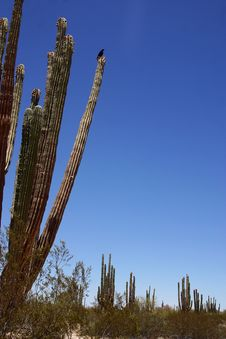 Free Desert Stock Photo - 9691800