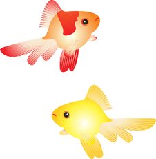 Free Gold Fish Royalty Free Stock Photos - 9692118