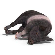Free Piglet Royalty Free Stock Image - 9692776