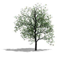 Free Tree Royalty Free Stock Image - 9692806