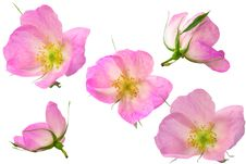 Free Flowers Stock Photo - 9693100