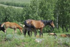 Free Horses In Mountains Royalty Free Stock Photo - 9693775
