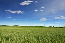 Free Wheat Field Stock Photo - 9694020