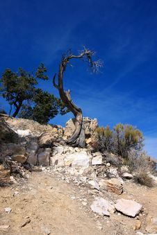 Free Dead Tree In A Desert Stock Photography - 9694982
