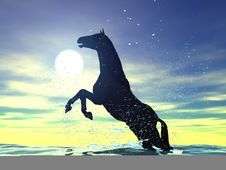Horse In Water Stock Photography