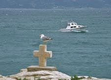 Free Gull And Croos At Sea Stock Images - 9695234