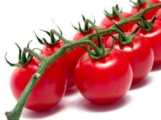 Free Branch Of Cherry Tomato 3 Royalty Free Stock Images - 9695369