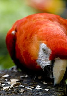 Free Macaw Royalty Free Stock Photos - 9695678