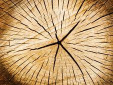 Free Cut Of A Tree A Poplar Stock Photo - 9695680