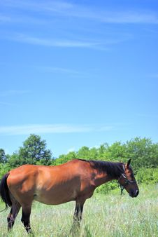 Free Beautiful Horse Stock Image - 9696031