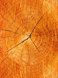 Tree An Oak A Cut Stock Photo