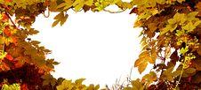 Free Decorative Hop Background Stock Images - 9696444